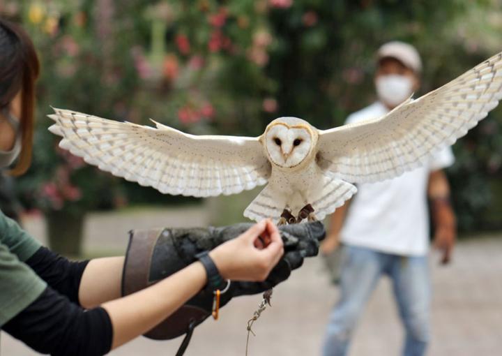 富士花鳥園 クリスマスイベント梟