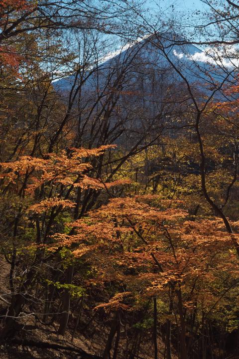 精進峠 登山道 富士山
