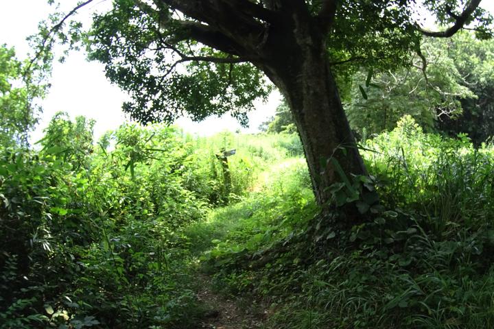 安城岬 ふれあい公園 尾根筋の大きな木