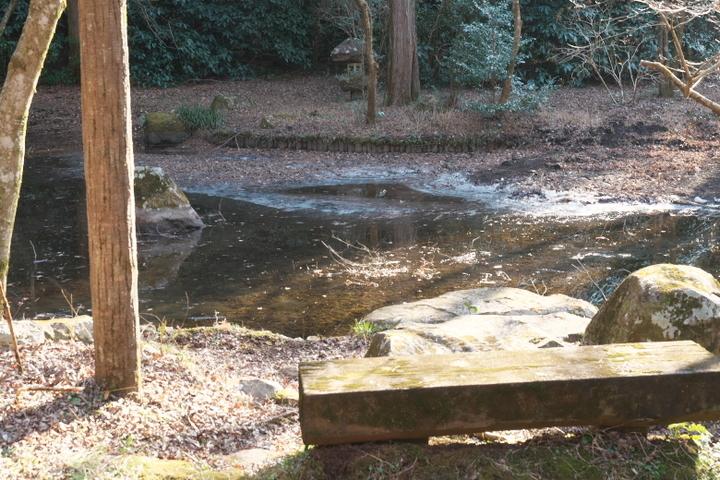 野田山健康緑地公園 池の氷