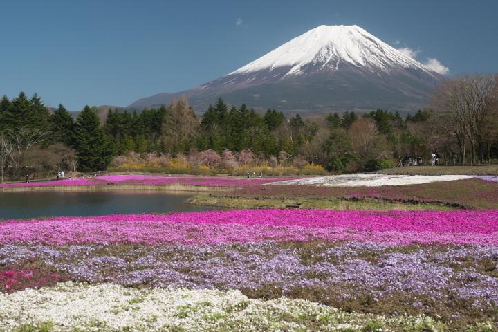 芝桜と竜神池と富士山