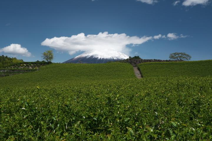 今宮の茶畑