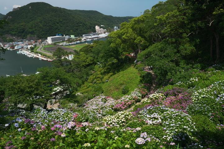 下田公園 紫陽花 寝姿山