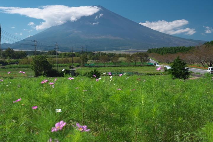 裾野 富士山とコスモス