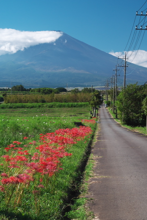 裾野 富士山と彼岸花