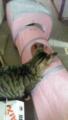 【空・風】猫用福袋の一部「キャットトンネル」