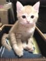 【福】べっぴんさん #猫部