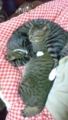 【空・風】我が家の愛猫 #猫の日