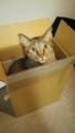 【空】箱入り猫