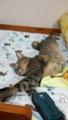 猫の日11