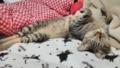 猫の日21