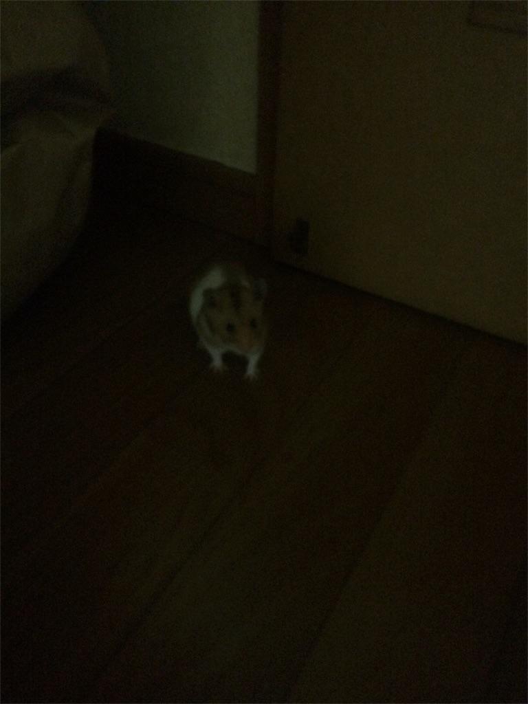 f:id:hukunekox:20180811190117j:image