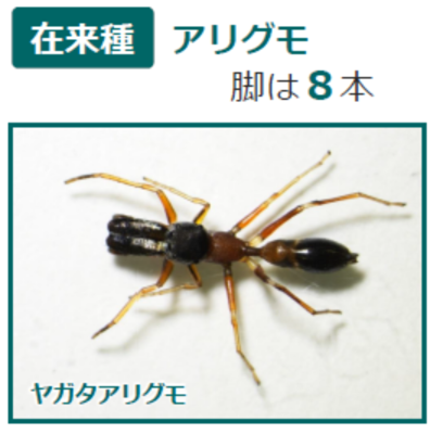 f:id:hukurou03:20171030105601p:plain