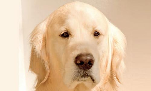 困った表情の犬の画像