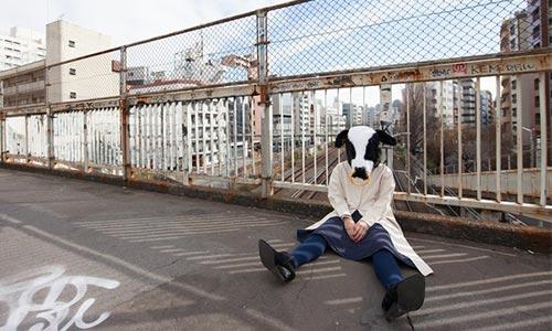 座り込む牛
