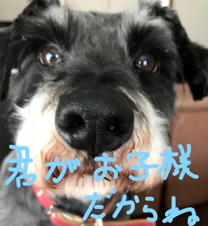 f:id:hukusuke39:20180919090328j:plain