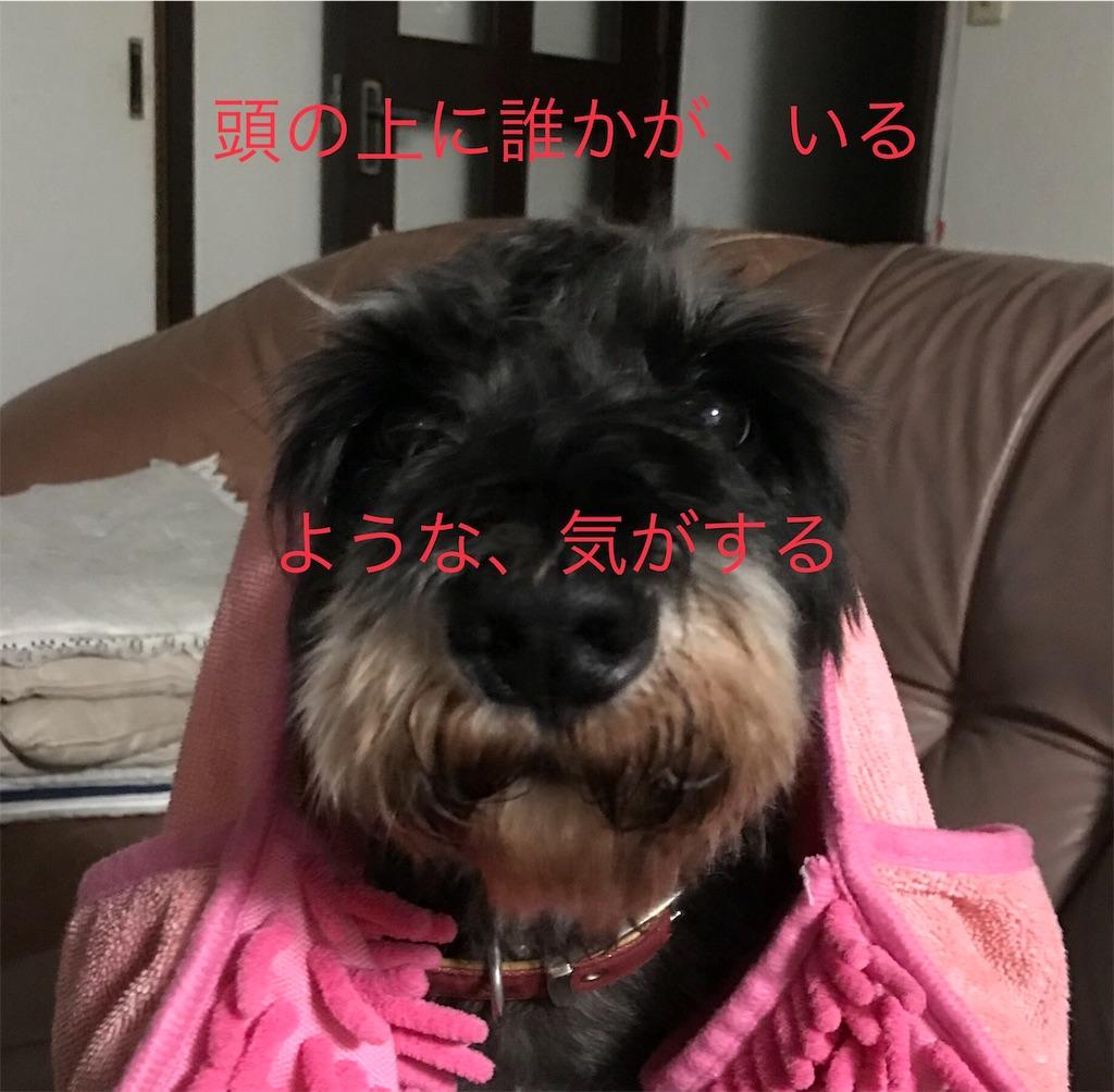 f:id:hukusuke39:20180928210719j:plain