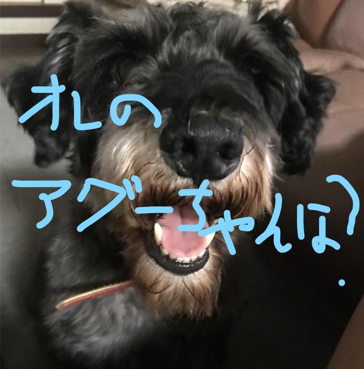 f:id:hukusuke39:20181010091733j:plain