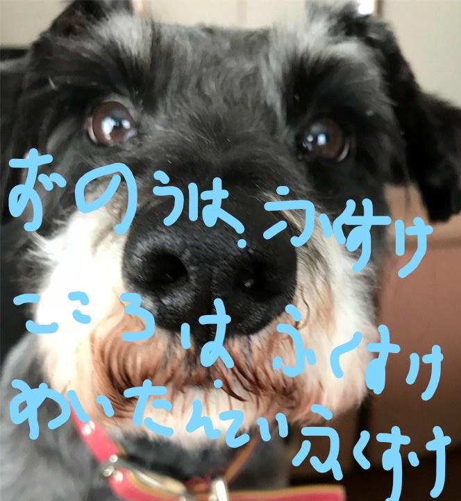 f:id:hukusuke39:20181011085012j:plain