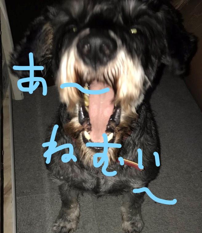f:id:hukusuke39:20181121124340j:plain