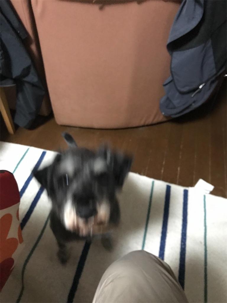 f:id:hukusuke39:20190216060413j:image