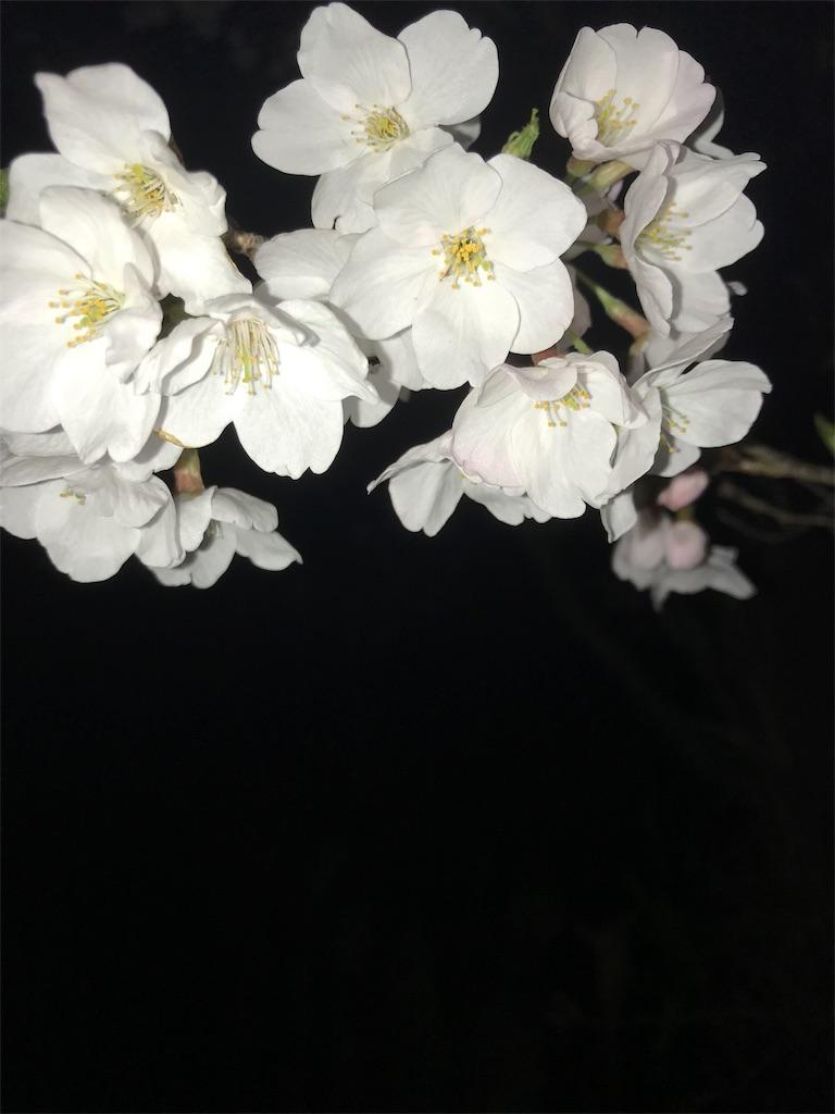 f:id:hukusuke39:20190329044102j:image