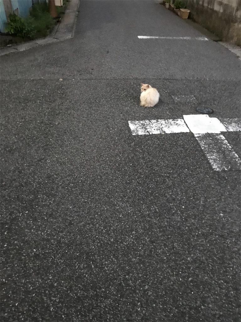 f:id:hukusuke39:20190626045815j:image