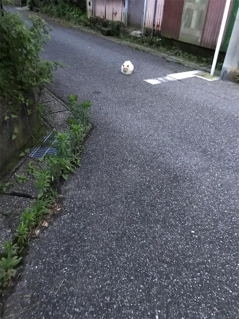 f:id:hukusuke39:20190709045850j:image