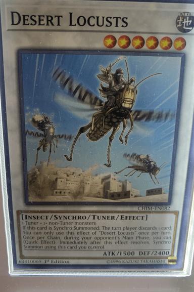 CHIM-EN082 Desert Locusts