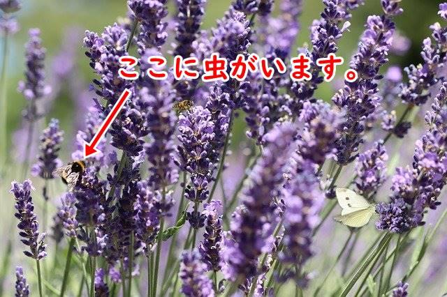 f:id:humidasu_1:20200418225945j:plain