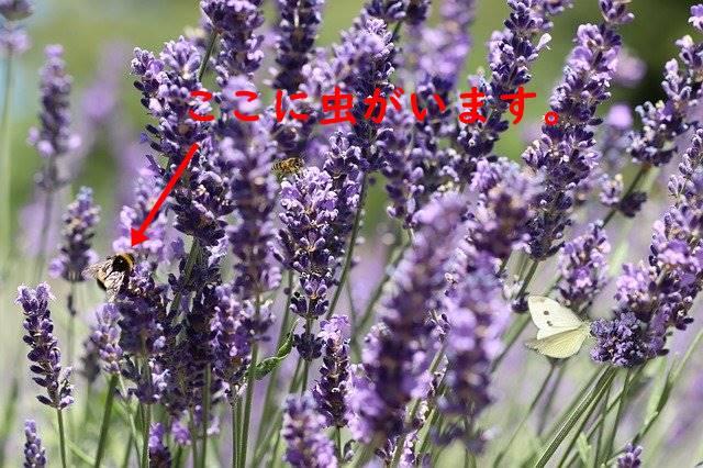 f:id:humidasu_1:20200418225948j:plain