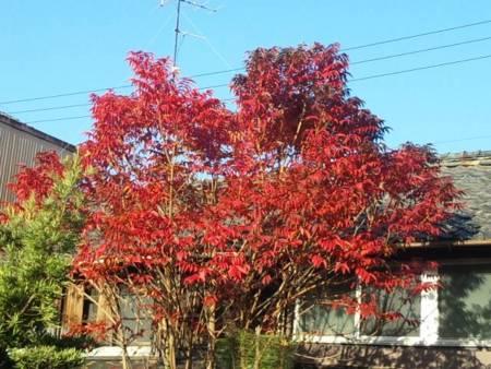 f:id:huton-takahara:20101129081101j:image