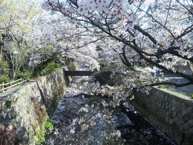 f:id:huton-takahara:20110412082101j:image