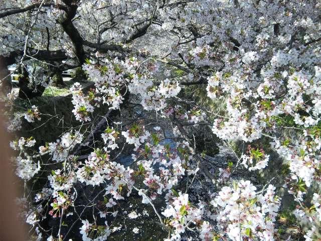 f:id:huton-takahara:20110412082130j:image