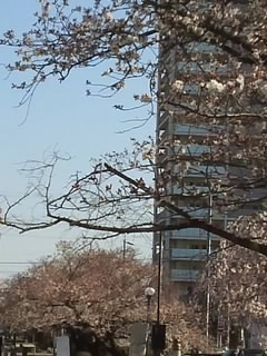 f:id:huton-takahara:20130326083642j:image