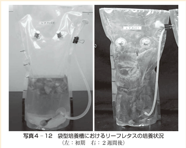 f:id:huyukiitoichi:20210613205509p:plain
