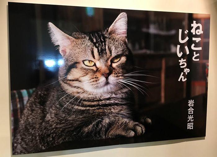 ねことじいちゃんの主人公タマ(猫)の写真