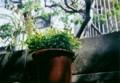 ハリネズミカメラ1