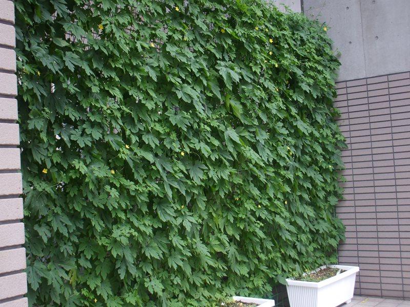 f:id:hyakuyou:20110801184806j:plain