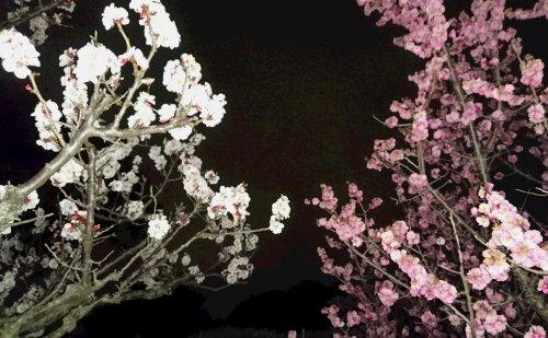f:id:hyamasaki:20170315204716j:plain
