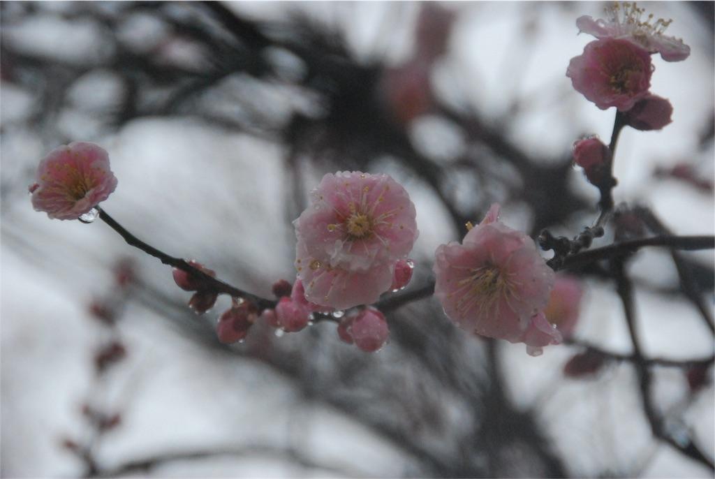 f:id:hyogonodaigakusei:20180401112217j:image