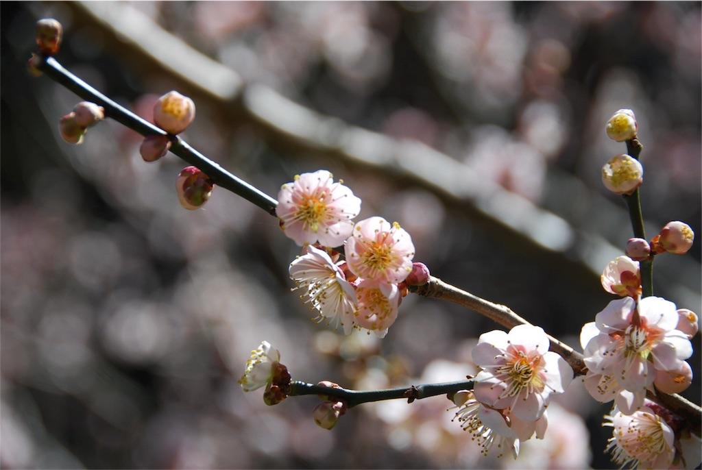 f:id:hyogonodaigakusei:20180403211328j:image