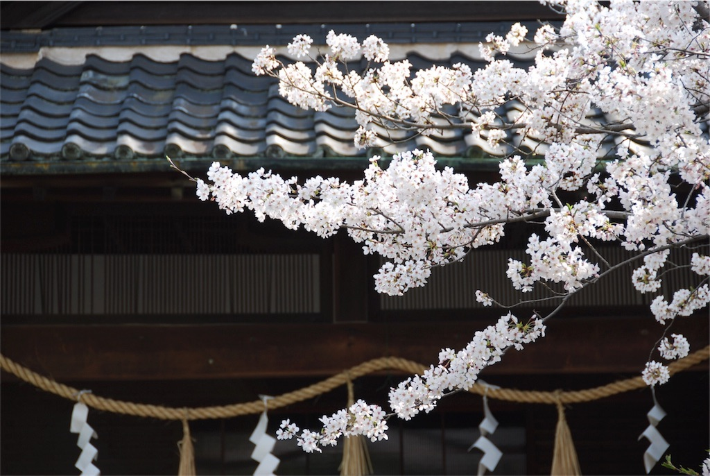 f:id:hyogonodaigakusei:20180406194948j:image