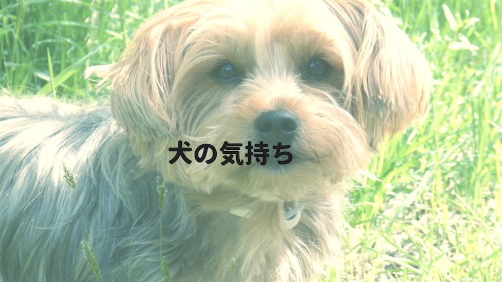 f:id:hyogonodaigakusei:20180508211229p:image