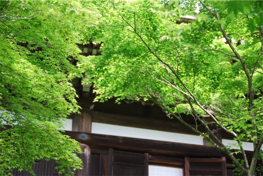 f:id:hyogonodaigakusei:20180522222101j:image