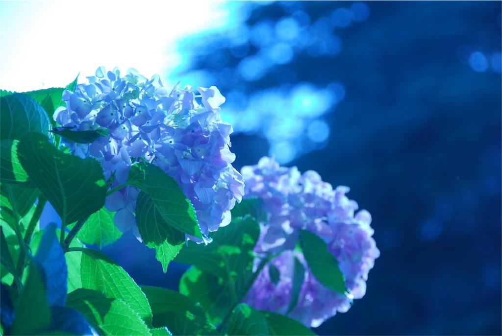 f:id:hyogonodaigakusei:20180606173436j:image