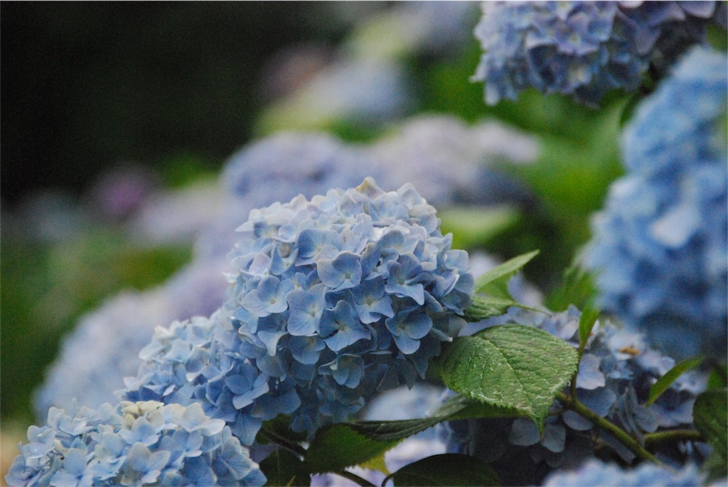 f:id:hyogonodaigakusei:20180625102528j:image