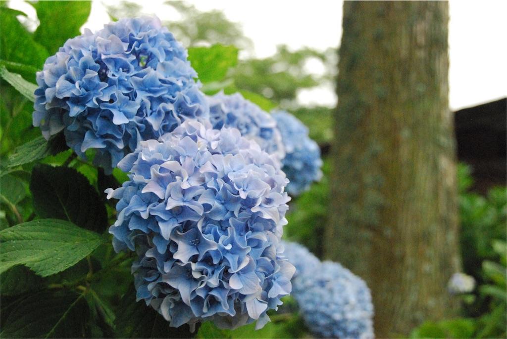 f:id:hyogonodaigakusei:20180625102732j:image