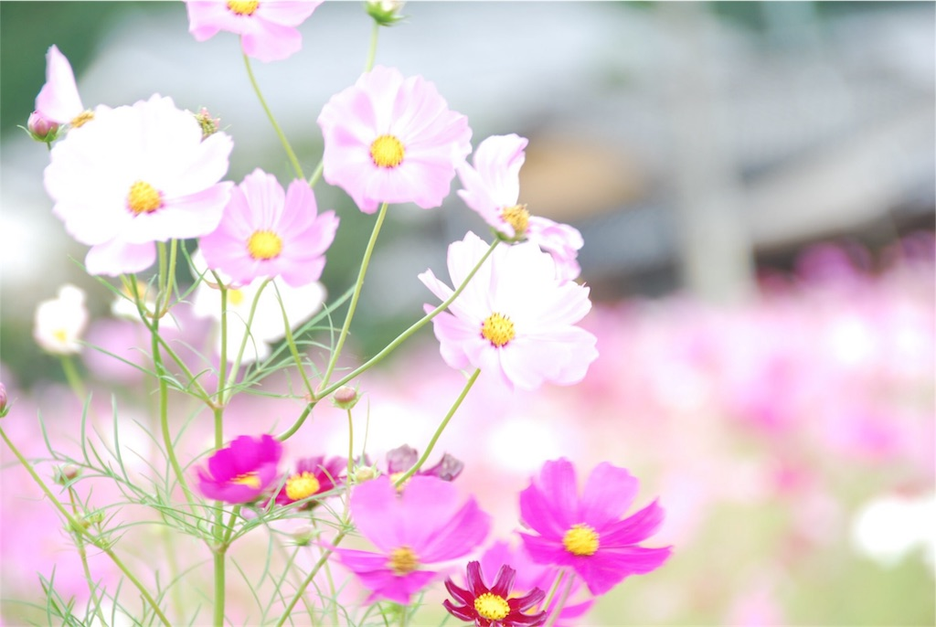 f:id:hyogonodaigakusei:20181014202746j:image