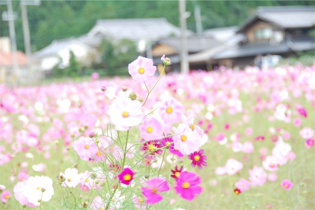 f:id:hyogonodaigakusei:20181014202749j:image